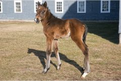 First foal for stakes winner Japan is this bay filly out of Lovely Daniella (by Gold Token)
