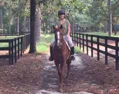 Riding under the pines of The Winter Farm OTTB Rescue and Retirement in Southern Pines, N.C.