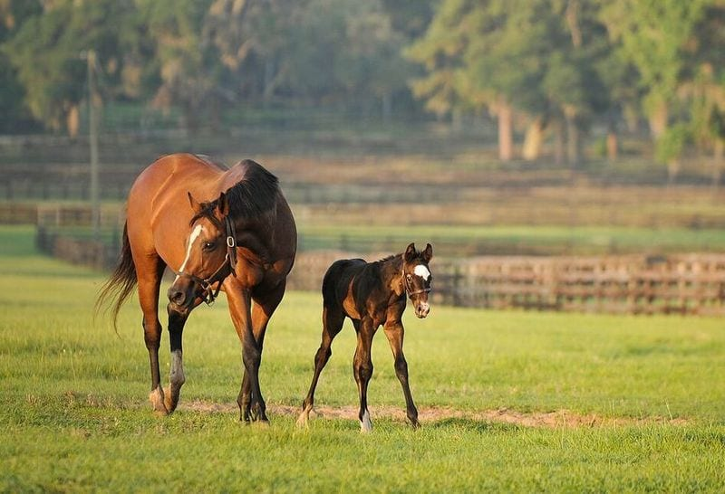 Declining numbers in Thoroughbred foal crops are tied to significant issues in U.S. racing