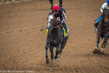Arrogate Midnight Storm Scheduled To Breeze Monday At
