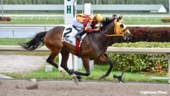 Curlin's Approval wins the Royal Delta with ease