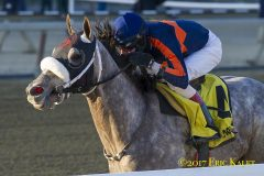 El Areeb dominates the Withers