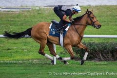 Lady Eli breezes at Palm Meadows on Feb. 18