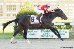 McCraken wins the Sam F. Davis Stakes in track-record time