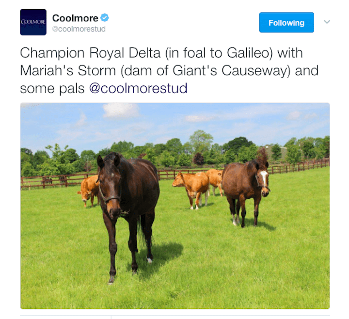 Photo of Royal Delta, posted by Coolmore Stud on Twitter, in June 2016