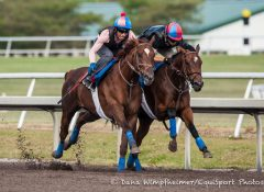 Irish War Cry works outside Dancing Rags at Palm Meadows Training Center