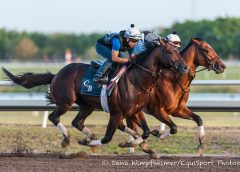 Practical Joke works inside Shagaf at Palm Meadows