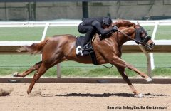 Hip 6, fastest breeze for 1/8 in 9 4/5, filly by Lucky Pulpit from the Havens Bloodstock Consignment