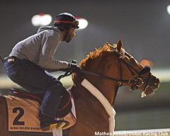 Mind Your Biscuits on the track in Dubai