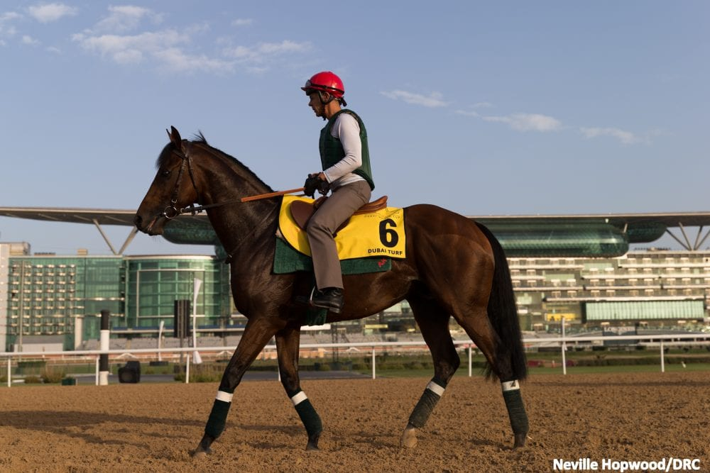 Connections Have High Expectations For Royally Bred Zarak