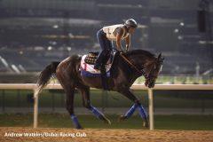 Arrogate training in Dubai