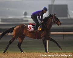 Awardee is one of two Japanese half-brothers in the Dubai World Cup