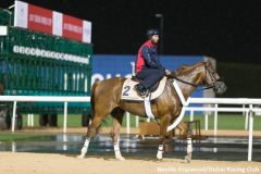 Mind Your Biscuits on the track at Meydan on Tuesday