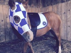 Mia tries on her Secretariat costume