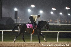 The Japan-based Epicharis training ahead of the UAE Derby in Dubai