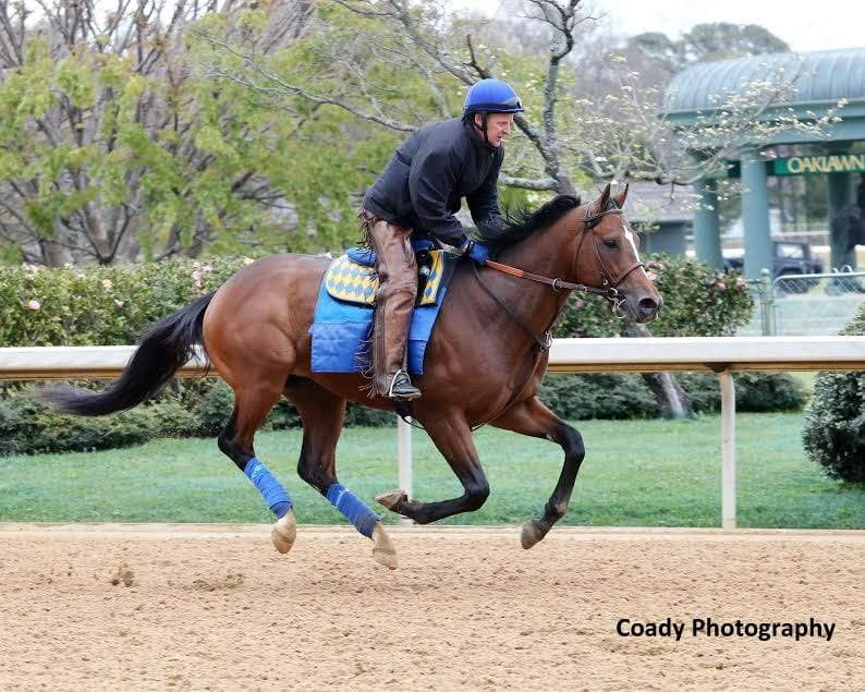 American Anthem gets a feel for the track at Oaklawn Park - he is the morning-line favorite for Saturday's G2 Rebel Stakes