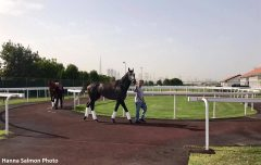 Arrogate and Hoppertunity out for a walk at Meydan