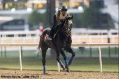 Arrogate galloping in Dubai