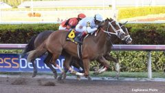 Distinta wins the Inside Information with a center-of-the-course late rally under John Velazquez