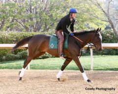 Elate gallops at Oaklawn on Mar. 10