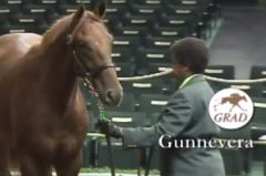 Gunnevera in the Keeneland sales ring as a yearling (screenshot)
