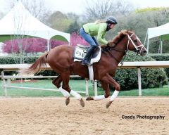 Unbeaten Malagacy, stepping into graded stakes company for the first time in Saturday's Rebel, gallops over the Oaklawn surface for trainer Todd Pletcher.