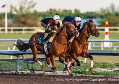 Practical Joke works inside a stablemate at Palm Meadows on March 18