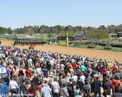 The crowd at Oaklawn for the Rebel Stakes card