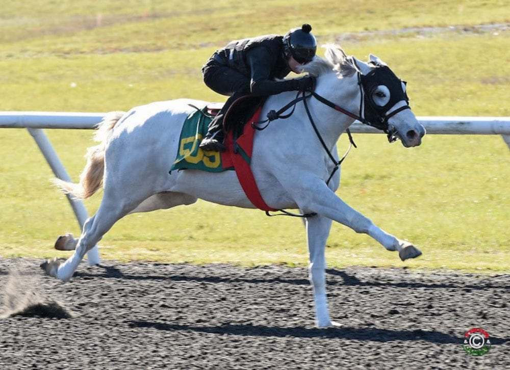 Scrambled breezed an eighth in :10 1/5 at the March OBS sale (Little Red Feather ad photo)
