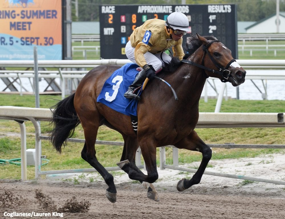 First Starter A Winner For Freshman Sire Data Link - Horse Racing