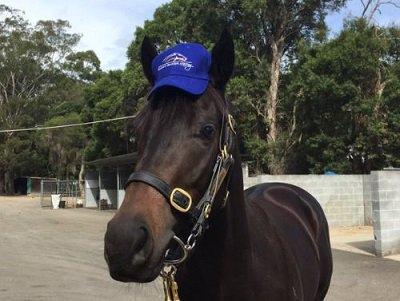 Horsey McHorseface wins horse race | SI.com