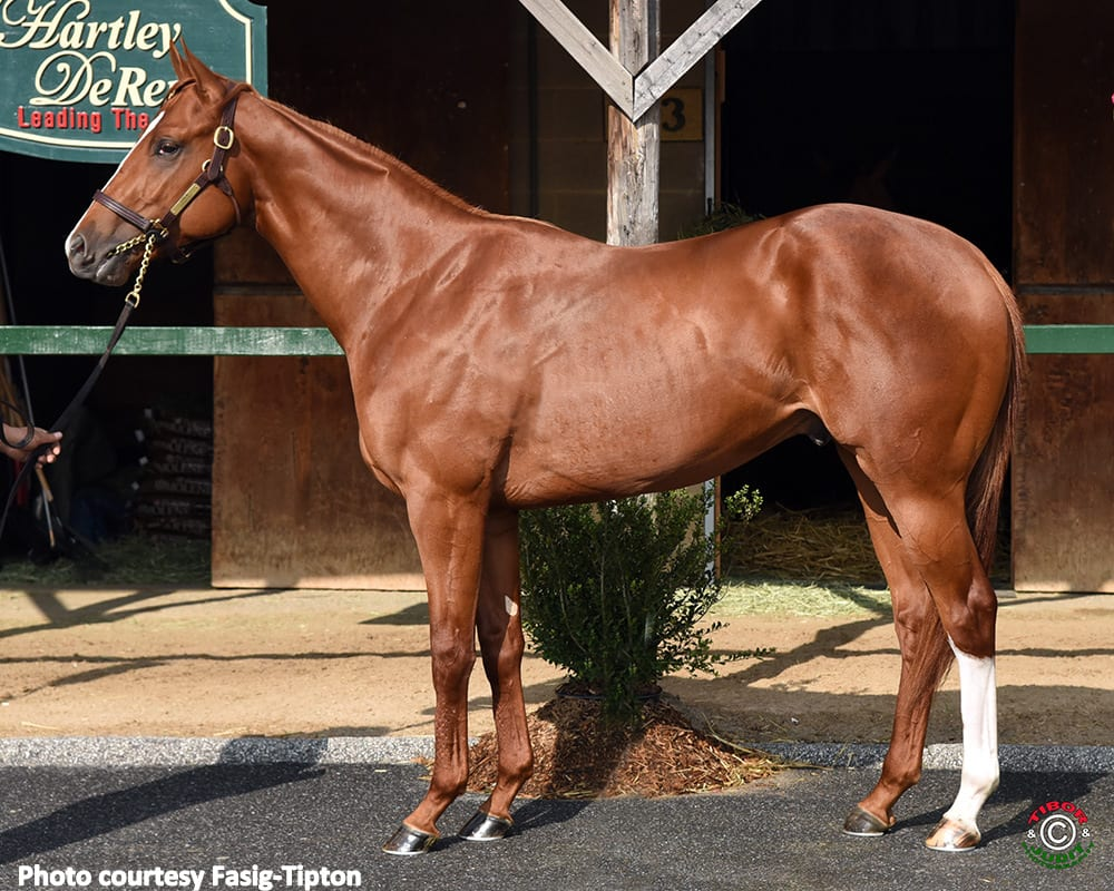 Curlin Colt Lights Up Board For Record $1.5 Million At Strong Fasig-Tipton Midlantic Sale