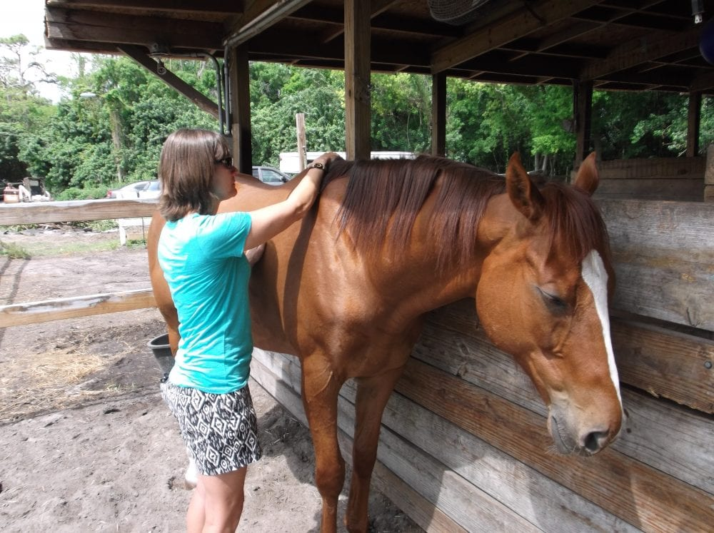 Equine physical therapy - Cosequin Presents Aftercare Spotlight Hands On Equine Therapy