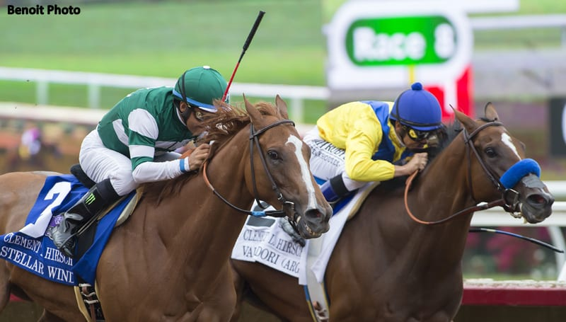 Champion Stellar Wind To Be Consigned To Keeneland November Sale By Lane's End
