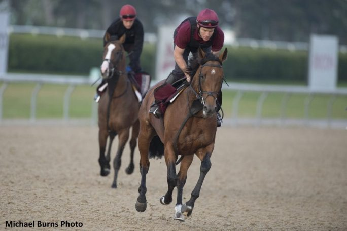 Woodbine Mile Distance Should Suit Deauville As He Turns