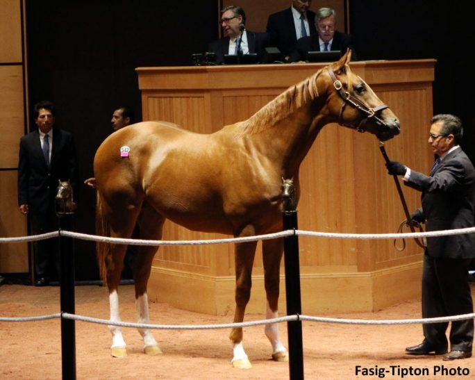 Oxley Goes To 500 000 For Violence Colt During Second