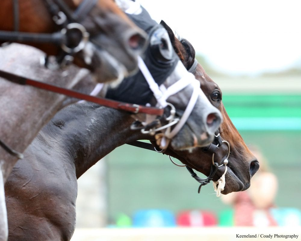 That's A Mouthful: Racing Bits, Explained - Horse Racing News