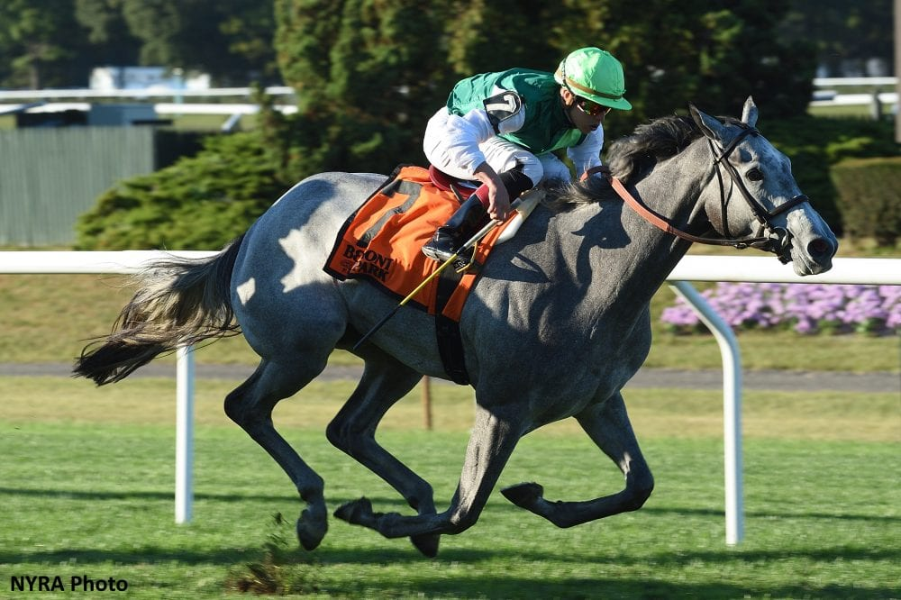 Significant Form Kicks Clear For Miss Grillo Victory