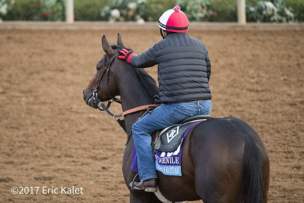 Bc notes pattern says romans is due in juvenile horse racing bc notes pattern says romans is due in juvenile falaconquin