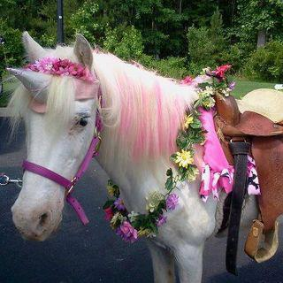 Pony Dressed As A Unicorn On The Loose In California