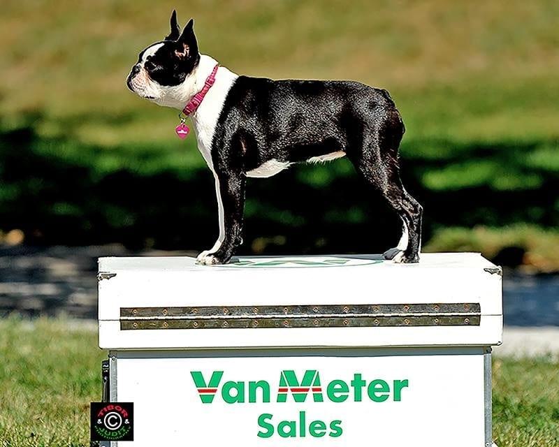 barn buddies go see cici at vanmeter sales horse racing news