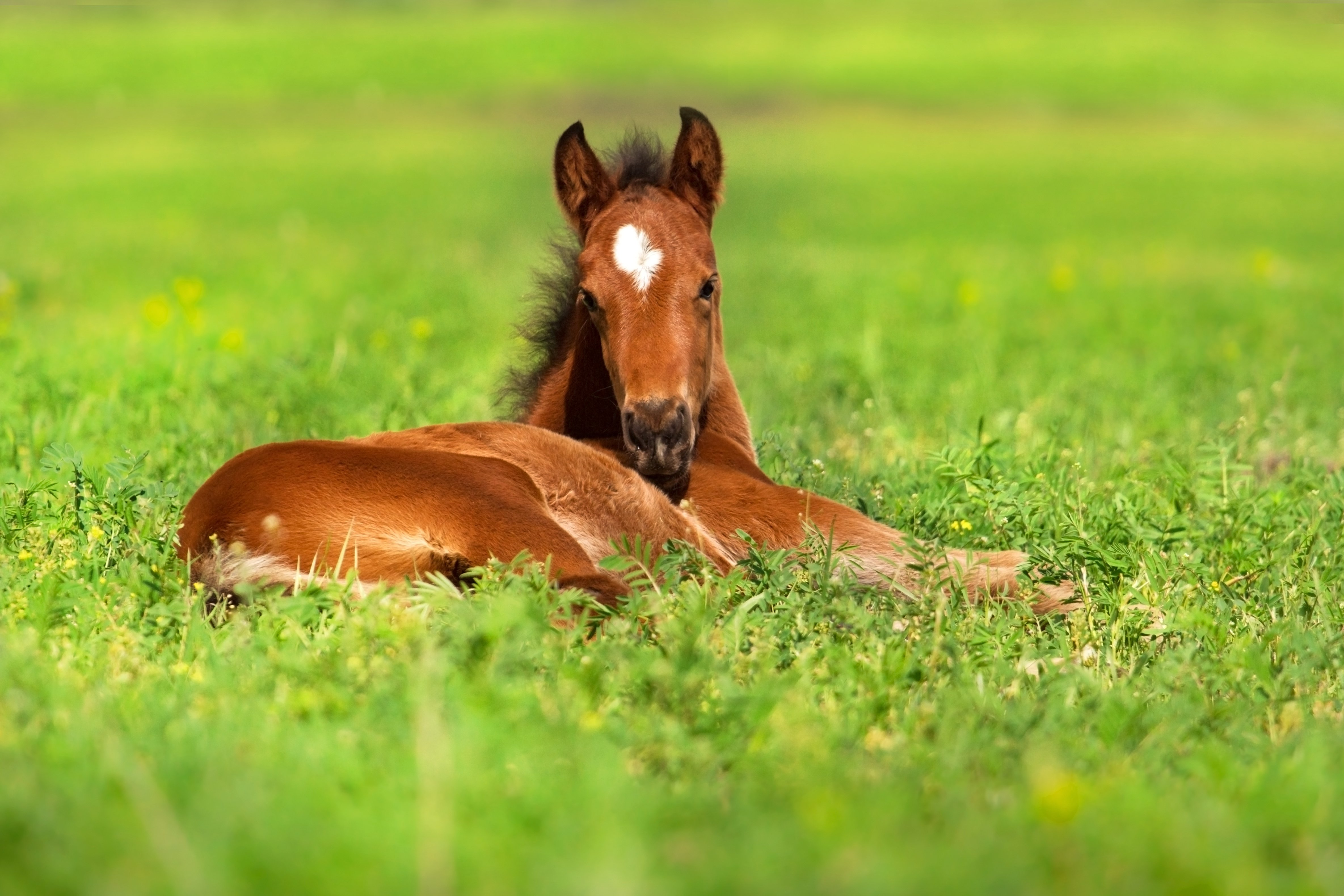 is vitamin d the key for maintaining foal health horse racing
