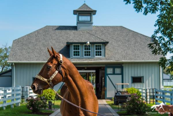 Kentucky Horse Park, Derby Museum Team Up For Legacy And Legend Tour