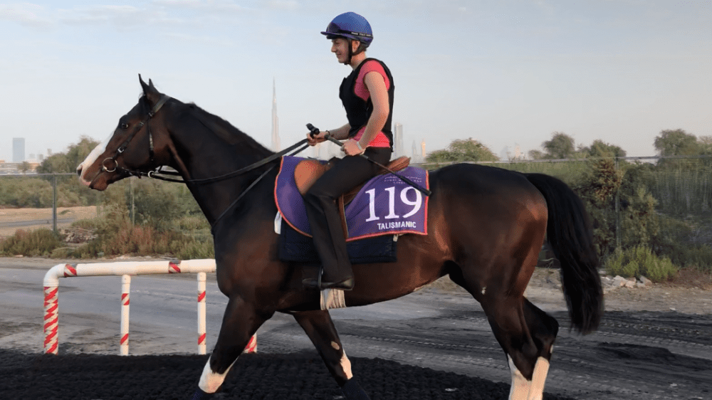 Talented Unflappable Talismanic Training Well For