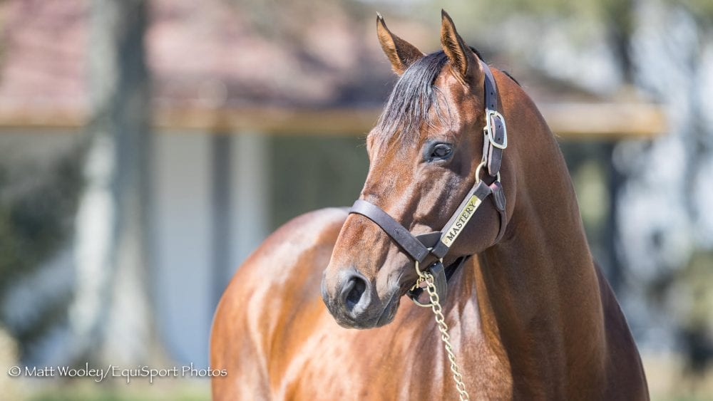 In The Stud Presented By Kentucky Equine Research: Mastery, New At Claiborne For 2018