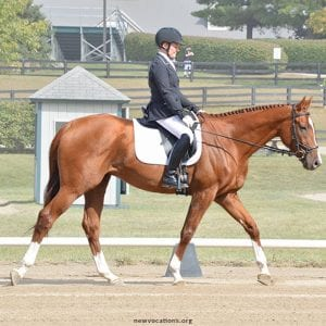 New Vocations To Add Dressage To 2018 Ky Show Roster
