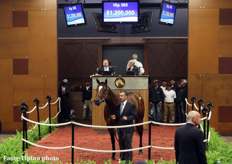 $1.2-Million Colt By Medaglia D'Oro Top Price At Fasig-Tipton Midlantic Sale