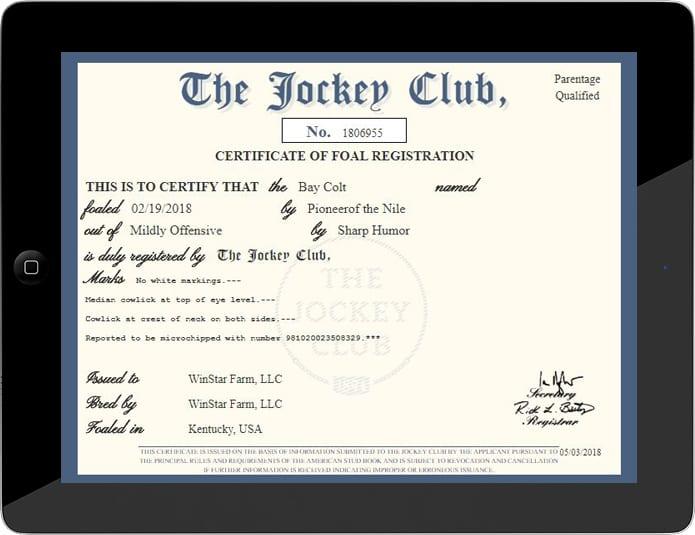 Jockey Club Issues First Digital Foal Registration
