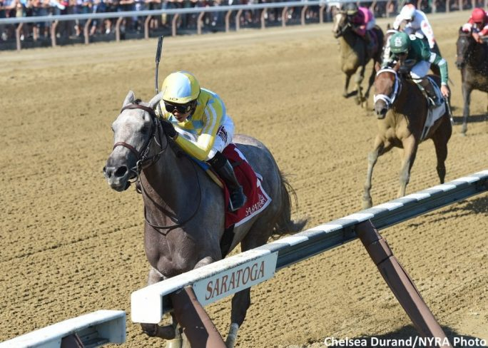 Catherinethegreat Gate To Wire In Schuylerville Horse