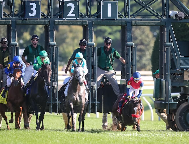 A Raving Beauty Leads Gate To Wire In First Lady Horse